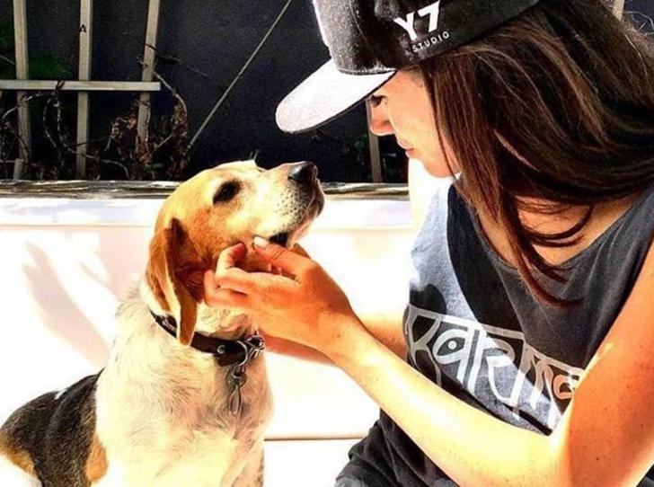 Фото №1 - Доброе сердце: Меган Маркл, Джордж Клуни и другие звезды, взявшие собаку из приюта