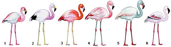 Фото №4 - Территория фламинго