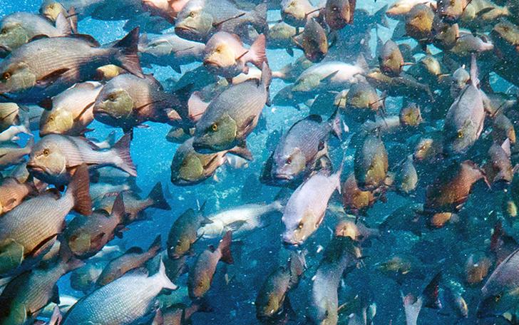 Фото №1 - Рыбья пробка
