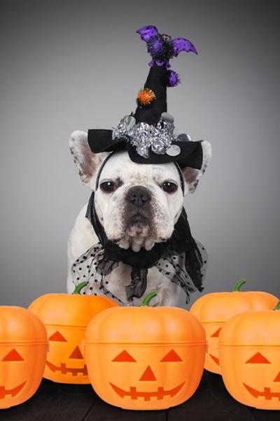 Фото №15 - Фотоподборка недели: собаки, которые уже готовы к Хэллоуину