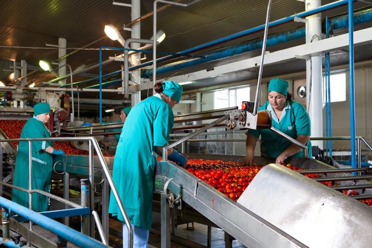 Фото №6 - Необычная экскурсия: как помидор становится томатной пастой ТМ «Помидорка»