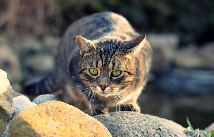 Фото №2 - Ветеринары рассказали, как избавить кошку от стресса