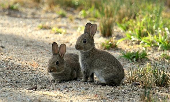Фото №3 - Кроличьи войны