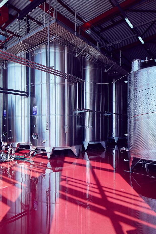 Фото №4 - «Поместье Голубицкое»: новое имя на полке российских вин
