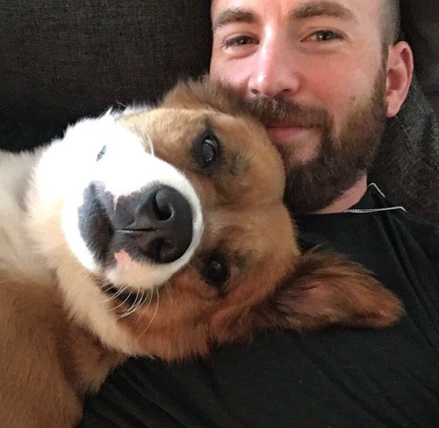 Фото №1 - Милота дня: посмотри, какой сюрприз устроил Крис Эванс своей собаке 🥺