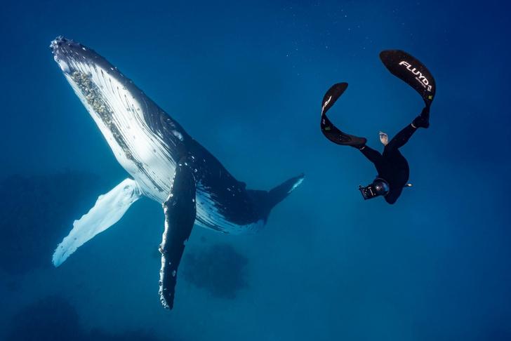 Фото №1 - Подводная встреча
