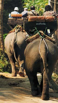 Фото №2 - Ход слоном
