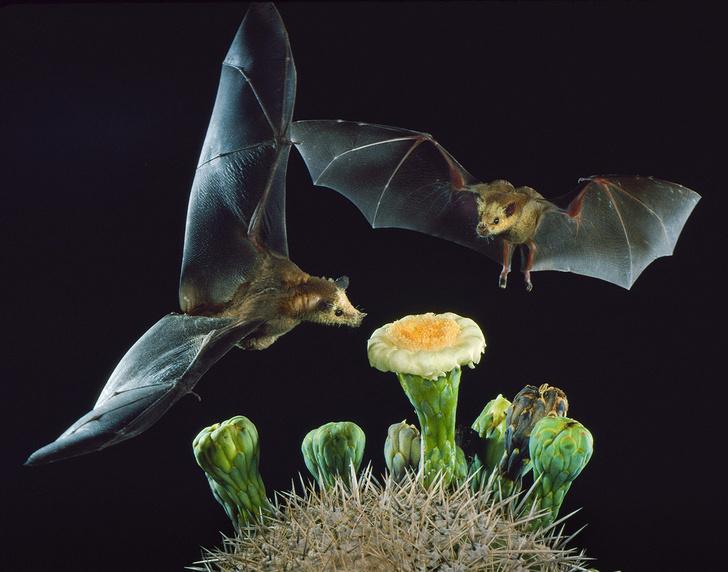 Фото №1 - Ночные пчелы