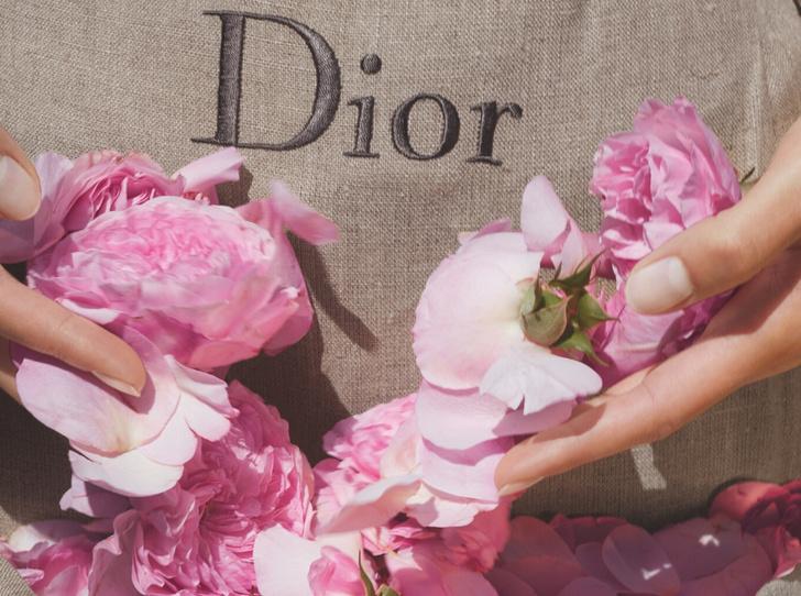 Фото №1 - 3 аромата Dior, созданных для весны