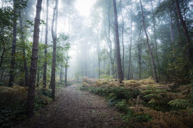 Сон лес