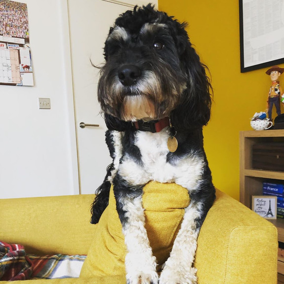 Фото №28 - Если собака без поводка: 15 фото песиков до и после прогулки