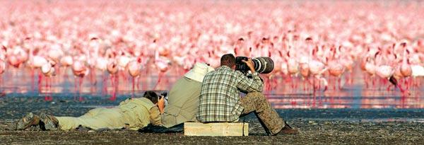 Фото №5 - Миллионы розовых фламинго