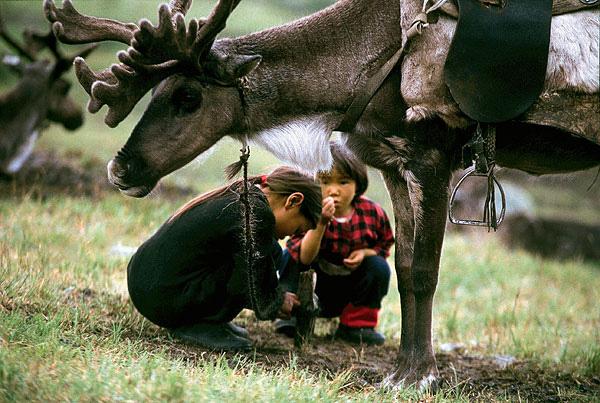 Фото №3 - Духи тайги: как живут оленеводы Тувы