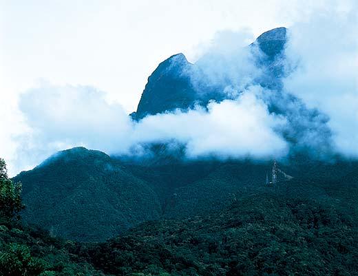 Фото №9 - Борнео, колыбель эволюции
