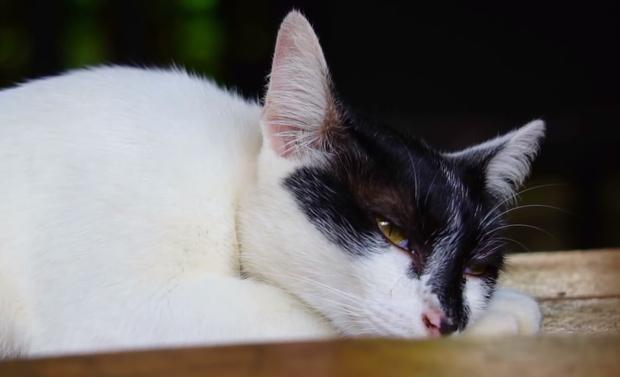 Фото №8 - Что значит поза, в которой спит твоя кошка (7 поз)