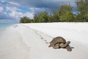 Фото №4 - Сейшелы: отпуск на краю света