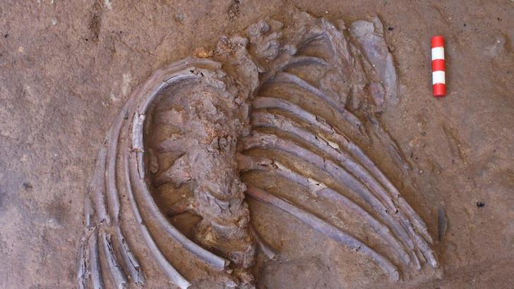 Фото №1 - В Ираке нашли детально сохранившийся скелет неандертальца