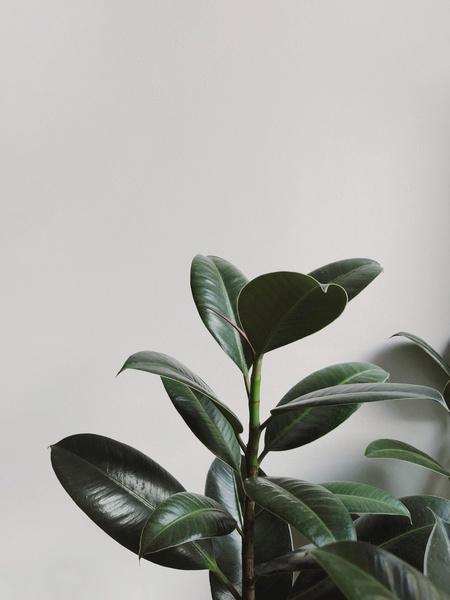 Фото №7 - 7 растений, которые помогут очистить воздух в комнате