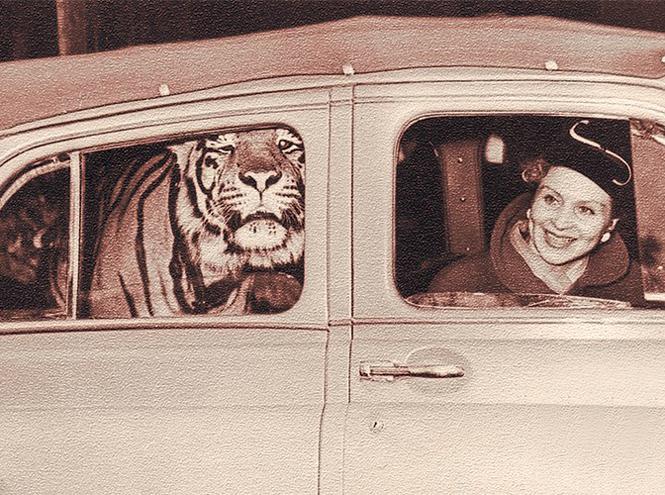 Фото №11 - Маргарита Назарова: звездный час, «итальянский» брак и одинокая смерть королевы тигров