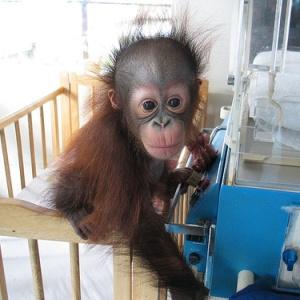Фото №1 - Дети умнее приматов