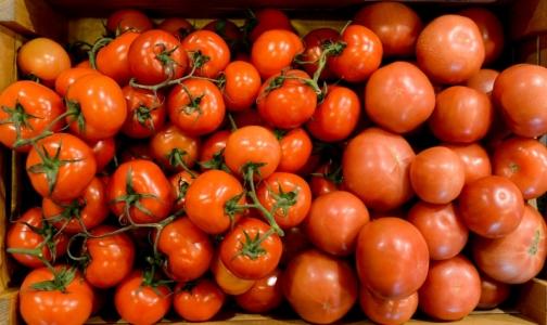 Фото №1 - Помидоры из российских магазинов проверили на нитраты и пестициды