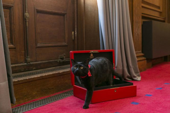 Фото №11 - Коты на службе Ее Величества