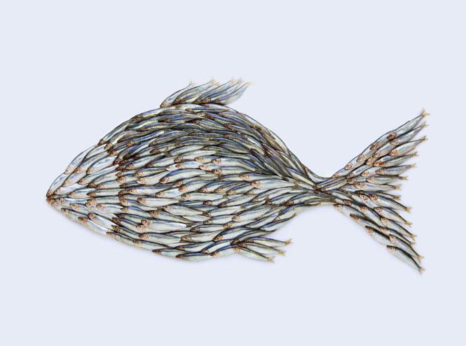 Фото №7 - 10 видов рыбы, которую лучше не есть