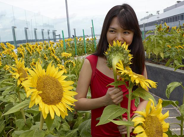 Фото №5 - Не выходя из аэропорта: 5 ботанических садов в Чанги (Сингапур)