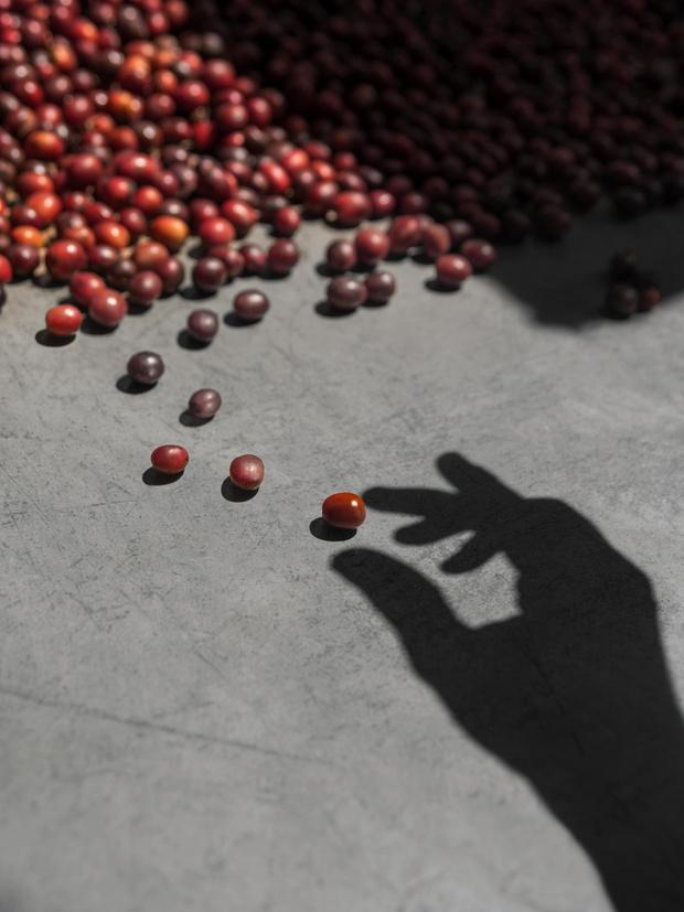 Фото №1 - Nespresso представили лимитрованную коллекцию блендов Master Origins