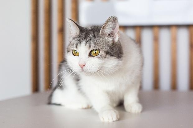 Фото №4 - Эти котики и песики ищут хозяев!