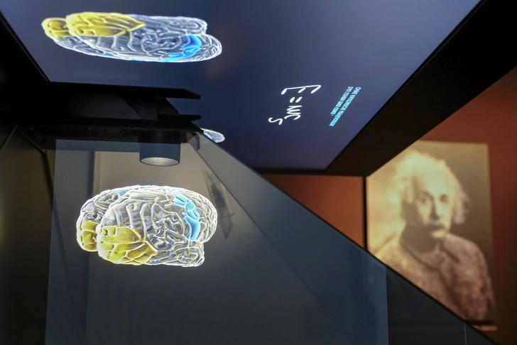 Фото №1 - Как объем мозга влияет на когнитивные способности
