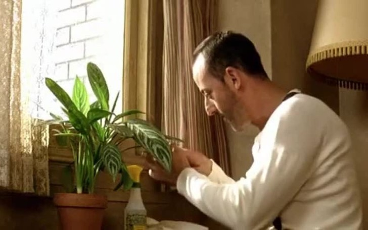 Фото №1 - 8 спасительных лайфхаков для комнатных растений