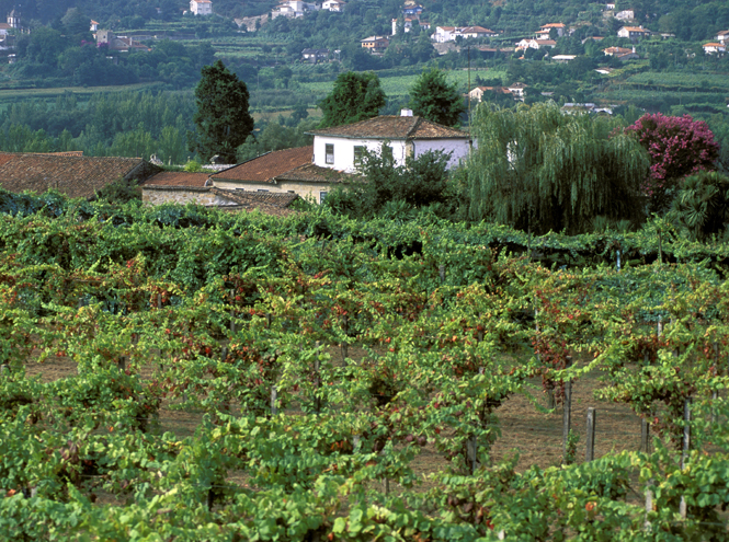 Фото №5 - Зеленое вино: что такое Vinho Verde и почему оно такое редкое (у нас)