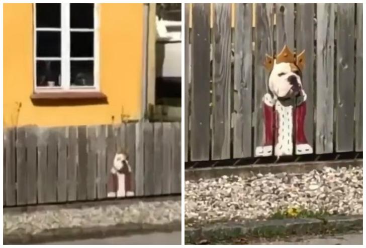 Фото №1 - Пес так любит смотреть на улицу из дырок в заборе, что хозяева нарисовали ему на досках веселые костюмчики (видео)