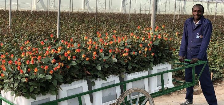Фото №3 - Родина роз: откуда приехали ваши цветы