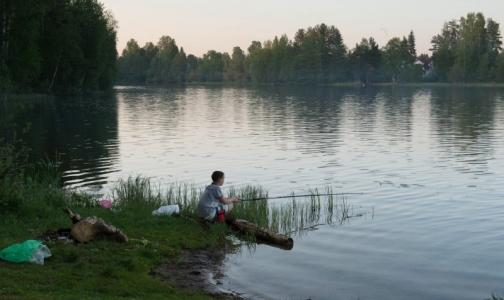 Фото №1 - В водоемах Выборгского района нашли фекальные бактерии