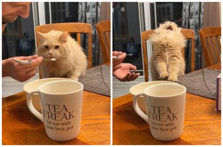 Фото №1 - Интернет покорила неожиданная реакция кота, который попробовал мороженое (видео)