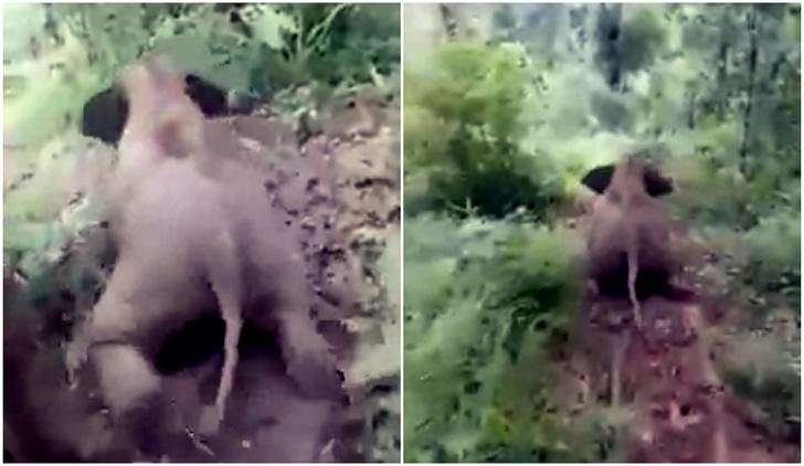 Фото №1 - Слоненок в джунглях съезжает с горки (видео)
