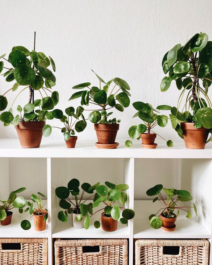 Фото №4 - 5 самых модных растений этой осени