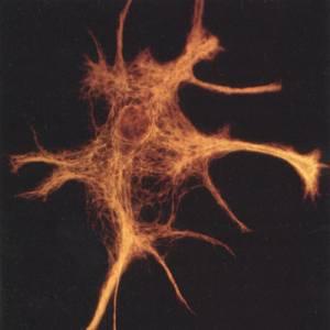 Фото №1 - Нервные клетки теперь восстанавливаются