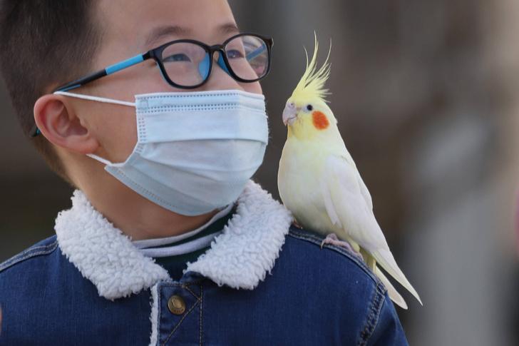 Фото №1 - Попугаи оказались способны подпевать услышанной мелодии