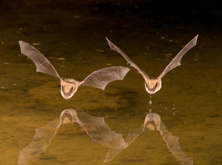 Фото №1 - Обыкновенные вампиры оказались способны на дружбу