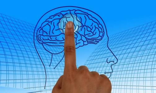Фото №1 - Татьяна Черниговская: Большинство «научпопа» о мозге на ТВ и в интернете — фейк