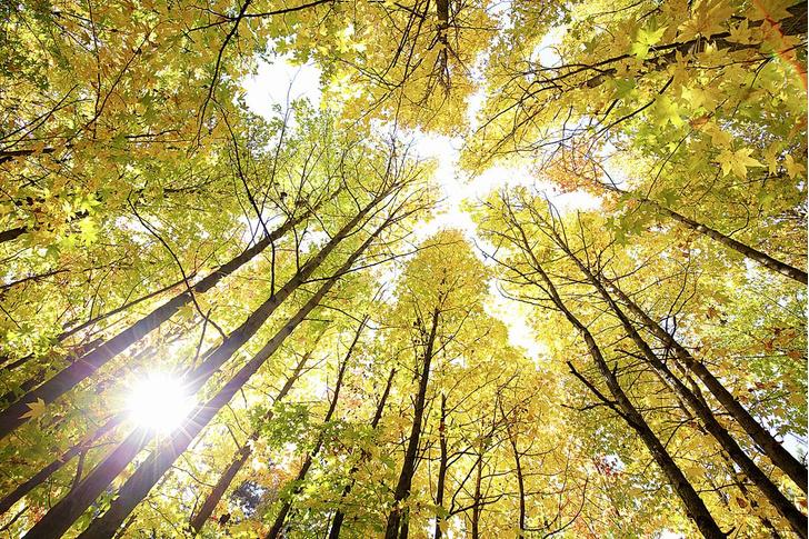 Фото №6 - Здравствуй, дерево! Тайная жизнь растений