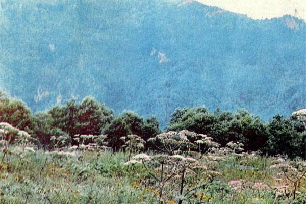 Фото №1 - На кордоне Киша