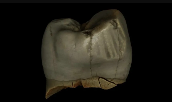 Фото №1 - Неандертальцы заботились о гигиене полости рта
