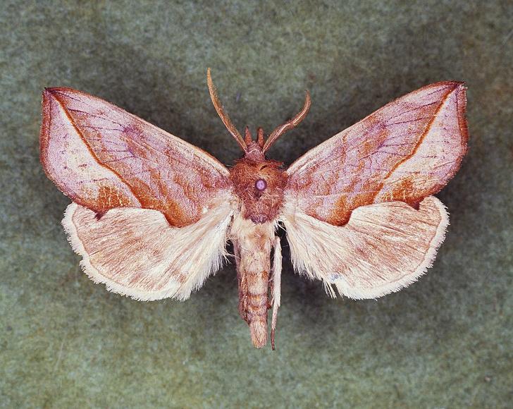 Фото №1 - Эффект бабочки: как чешуекрылым насекомым удается оставаться для нас таинственными незнакомцами