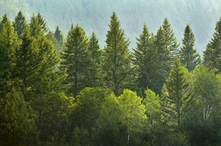 Фото №1 - Экологи признали Россию самой зеленой в мире страной