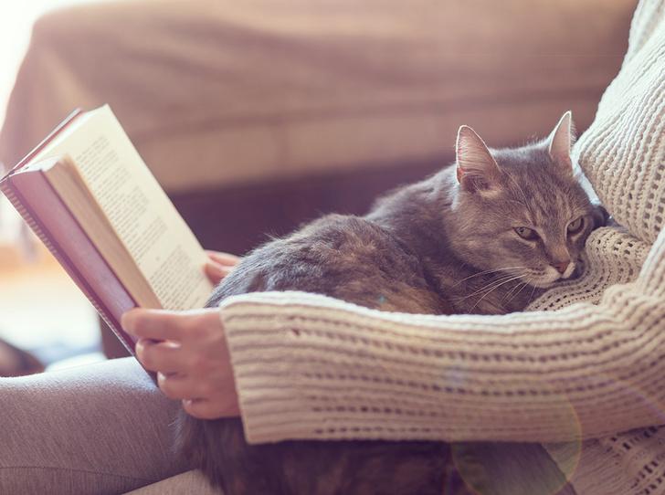 Фото №1 - 5 лучших книг, чтобы скоротать вечер