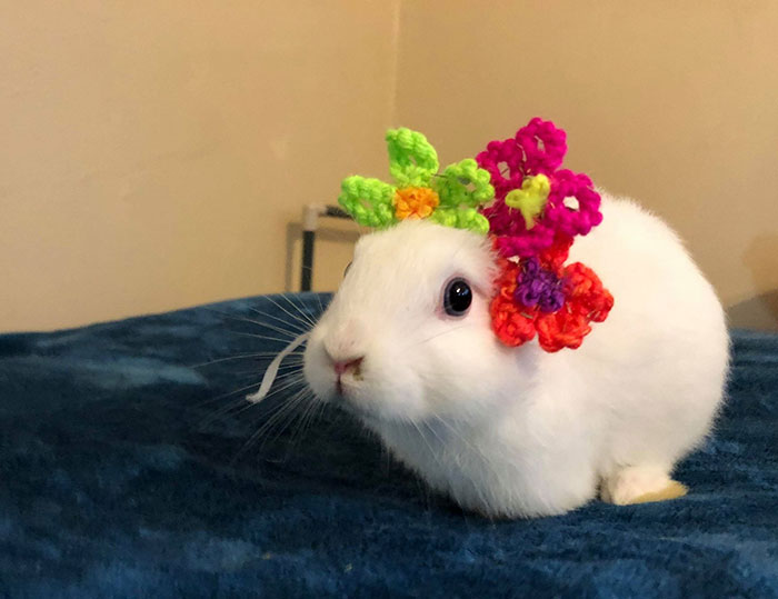 Фото №3 - Хозяйка кролика, который родился без ушей, вяжет ему ушки